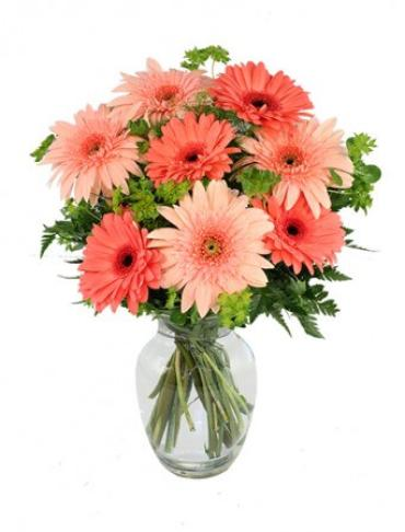 CRAZY IN LOVE DAISIES