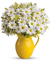 Teleflora Sunny Day Pitcher of Daisies